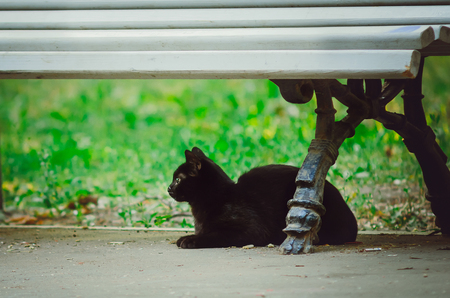 A black, mongrel cat sits on the street under a bench.