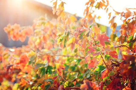 Red and yellow autumn leaves. Beautiful autumn background. Stock Photo