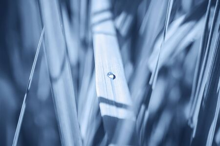 Surreal natural background. A drop of dew on the grass, tinted in blue. Blurred, selective focus.