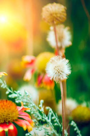 Flower seeds. Beautiful natural background with flowers.