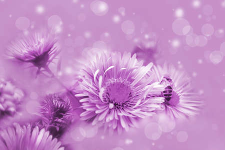 flowers on a beautiful lilac background. Blurred delicate purple background. Floral nature background, free space for text. Romantic soft delicate artistic image