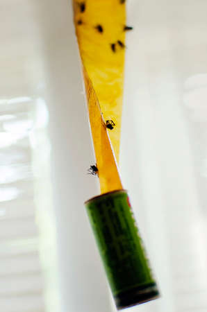 Close up view of different insects stuck on fly tape.