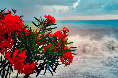 Beautiful red flowers against the background of the sea surf. Beautiful landscape. Standard-Bild
