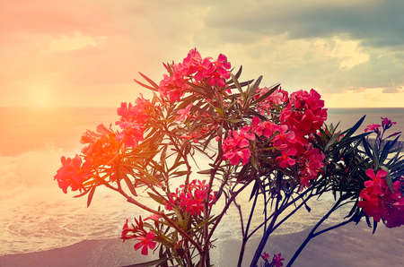 Beautiful red flowers on the background of the sea. Setting sun, toned photograph.