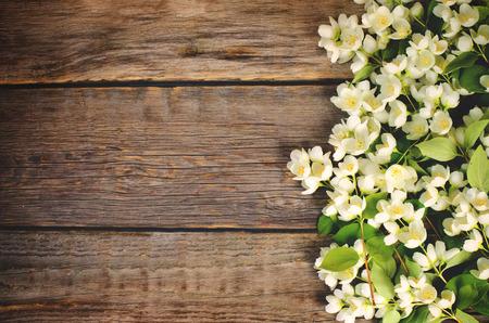 Jasmine flowers on a dark wood background.  Фото со стока