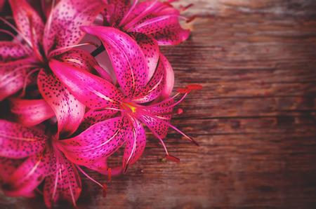 lilia: flores de color rosa lilia sobre un fondo de madera oscura. tonificaci�n. enfoque selectivo en el medio de la flor Foto de archivo