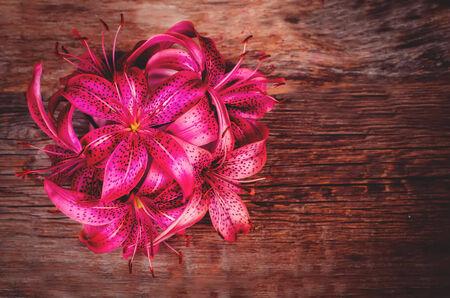 lilia: flores de color rosa lilia sobre un fondo de madera oscura. tonificaci�n. enfoque selectivo en la flor central