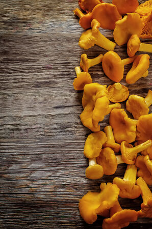 tinting: chanterelle mushrooms on a dark wood background. tinting. selective focus on the middle left mushroom