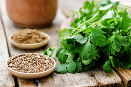 coriander on a dark wood background. tinting. selective focus