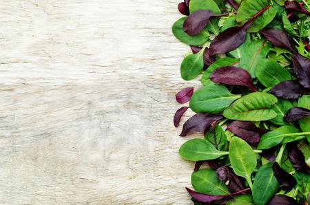 salad in plate: mezclar ensalada de Romaine, r�cula, espinaca, mizuna, acelgas, ensalada de roble en un fondo de madera blanca. tintado. enfoque selectivo