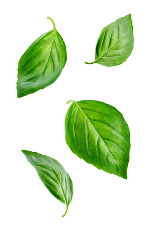 Fresh Flying Basil leaves on a white background. toning. selective focus Stock fotó