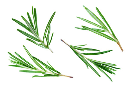 Fresh Rosemary leaves isolated. toning. selective focus Stockfoto