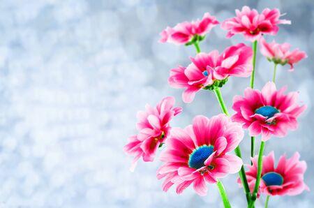 Pink chrysanthemum flowers. toning. copy space