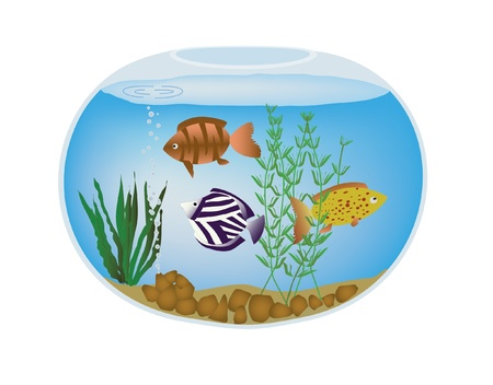 Round fishbowl with exotic colorful fish and seaweed