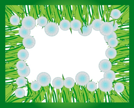 Frame of fluffy dandelion flowers for a photo or birthday card or special occasion congratulation  Illustration