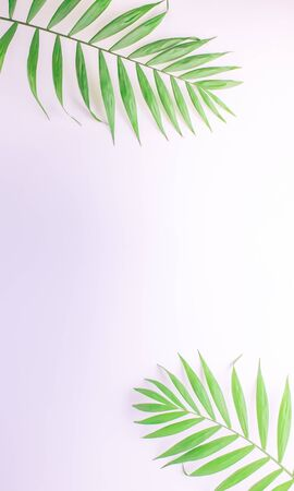 Branches, palm leaves on a white background. Top view with copy space. Vertical photo.