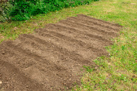 Small vegetable garden. Land prepared for planting salad greens. Gardening concept. 写真素材