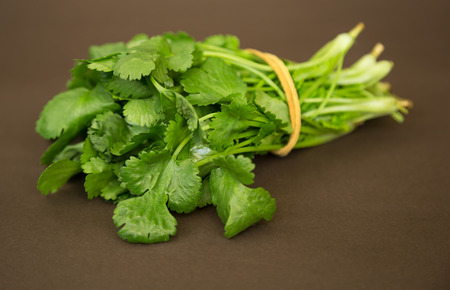 cilantro: bunch of fresh green coriander on a table