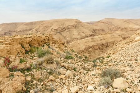 negev: Winter vegetation in the Negev desert Stock Photo
