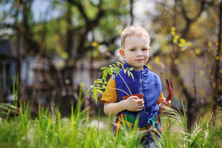 Handsome little blond boy planting and gardening tomato seedlings in garden or farm in spring day photo