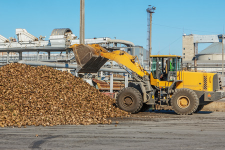 frontend: Front-end loader in action on the loading of sugar beet at a sugar factory