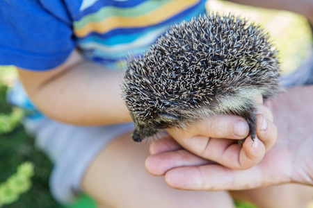 Little boy holding a beautiful hedgehog
