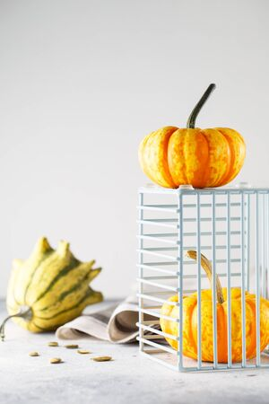 Still life composition with colorful decorative mini pumpkins and pumpkin seeds. Mini orange squashes, holiday decoration. Different sorts of mini gourds