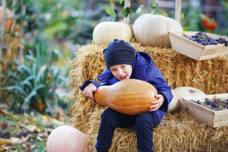 Little boy having fun on a tour of a pumpkin farm at autumn. Child biting the giant pumpkin. Pumpkin is traditional vegetable used on American holidays - Halloween and Thanksgiving Day