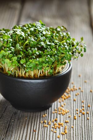 Close-up of Mustard Microgreens, green leaves and stems. Sprouting Microgreens. Seed Germination at home. Vegan and healthy eating concept. Sprouted Mustard Seeds, Micro greens. Growing sprouts