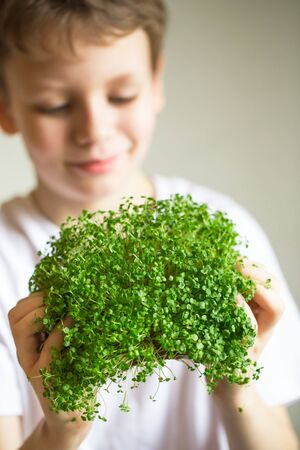 microgreen sprouts in kids hands Raw sprouts, microgreens, healthy eating concept. Sprouting Microgreens. Seed Germination at home. Vegan and healthy eating concept. Growing sprouts. Organic foods