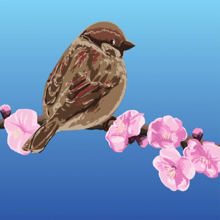 Sparrow on a branch of cherry blossoms - vector illustration Vector