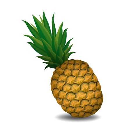 ananas: pineapple pineapple on white background - vector illustration