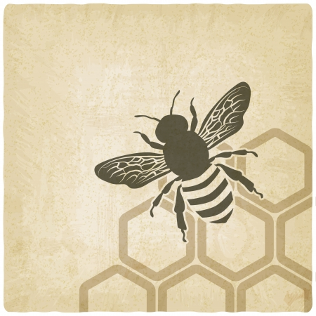 with pollen: bee old background - vector illustration