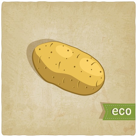 potato eco background - vector illustration. Vector