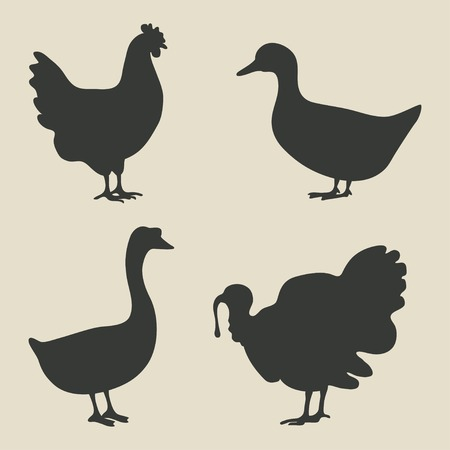 domestic fowl icon - vector illustration.  Vector
