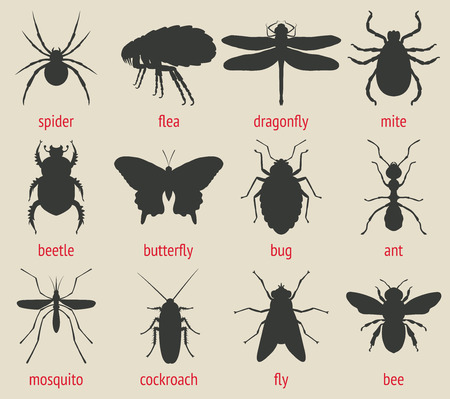 disease control: insects icons set - vector illustration. eps 8