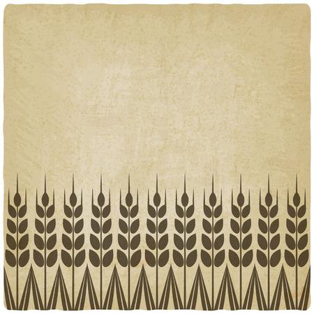 rye: ripe wheat ears old background - vector illustration.  Illustration