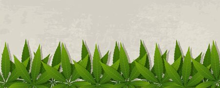 Grunge banner with cannabis leaves. Vector illustration