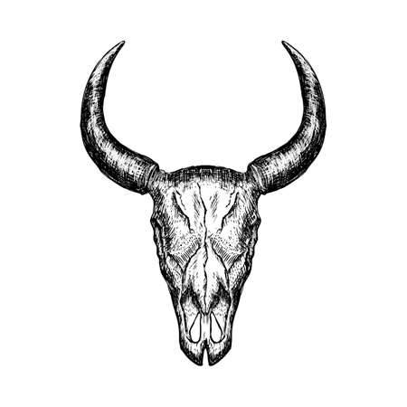 Hand-drawn buffalo skull isolated on white background. Vector illustration