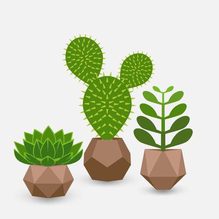 Set of houseplant succulents in pots. Vector illustration