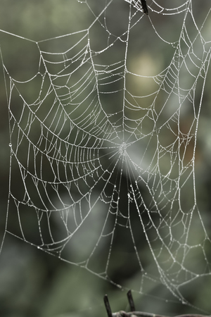 dews: Cobweb with small dews during fog in the morning