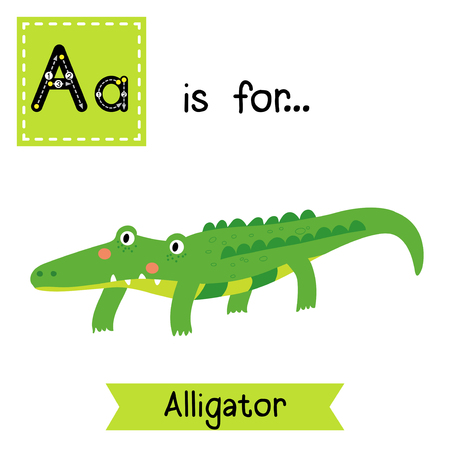 cute children: A letter tracing. Alligator. Cute children zoo alphabet flash card. Funny cartoon animal. Kids abc education. Learning English vocabulary. Vector illustration.