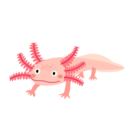 amphibia: An axolotl cartoon character. Mexican salamander or walking fish with pink color. Isolated on white background. Vector illustration. Illustration