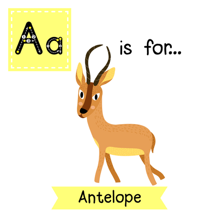 learning english: A letter tracing. Antelope. Cute children zoo alphabet. Funny cartoon animal. Kids abc education. Learning English vocabulary. Vector illustration.