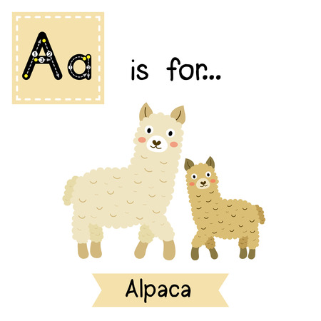 A letter tracing. Mom and child Alpaca. Cute children zoo alphabet flash card. Funny cartoon animal. Kids abc education. Learning English vocabulary. Vector illustration.