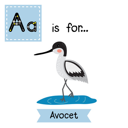 learning english: A letter tracing. Avocet. Cute children zoo alphabet flash card. Funny cartoon animal. Kids abc education. Learning English vocabulary. Vector illustration.