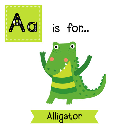 caiman: A letter tracing. Standing Alligator. Cute children zoo alphabet flash card. Funny cartoon animal. Kids abc education. Learning English vocabulary. Vector illustration. Illustration
