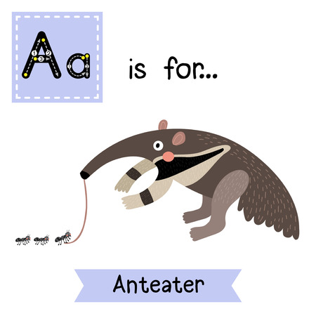 learning english: A letter tracing. Anteater. Cute children zoo alphabet flash card. Funny cartoon animal. Kids abc education. Learning English vocabulary. Vector illustration.