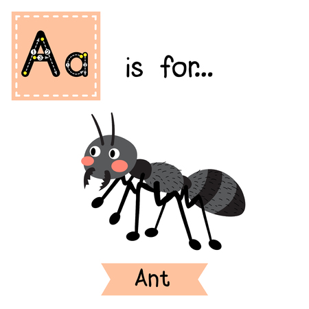 A letter tracing. Black ant. Cute children zoo alphabet flash card. Funny cartoon animal. Kids abc education. Learning English vocabulary. Vector illustration. Illustration
