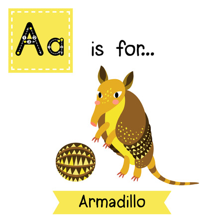 learning english: A letter tracing. Armadillo. Cute children zoo alphabet flash card. Funny cartoon animal. Kids abc education. Learning English vocabulary. Vector illustration. Illustration